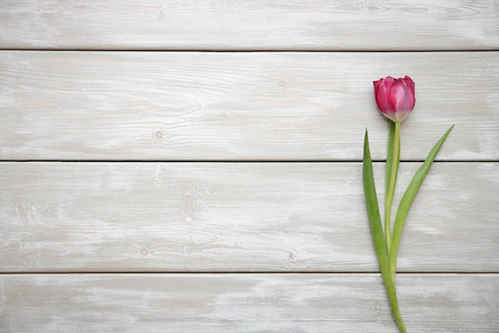 tulip on wooden background