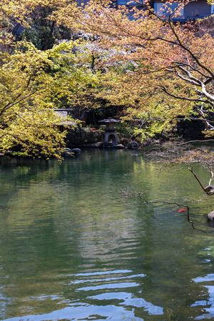 beautiful tradizional japanese garden with pond in the heart of Tokyo's sunny weather, april Stok Fotoğraf - 121685006