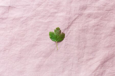 Green leaf on a flaxen pink background, minimalism, free space for text