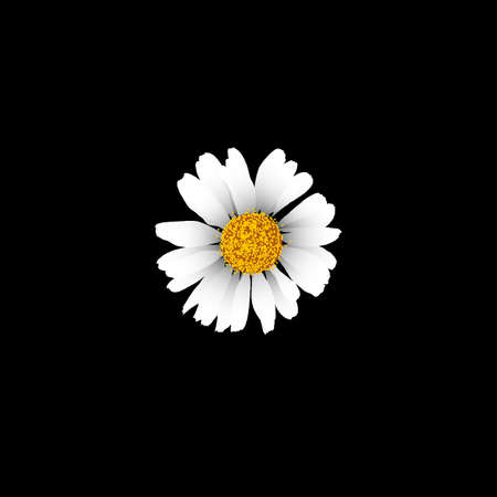 Detailed camomile on black background Illustration