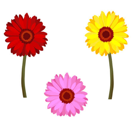 orange gerbera: Set of daisy flowers Illustration