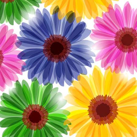 gerbera daisy: Flores Margarita brillante luz solar (fondo)