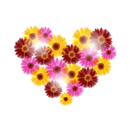 passion flower: Daisy flower heart in sunlight on white background