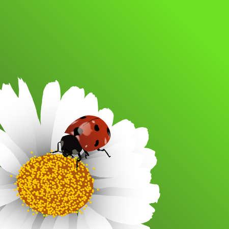 Spring background with ladybug on chamomile Vector