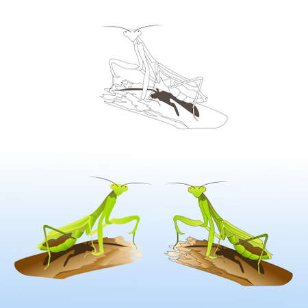 Set of praying mantises in different styles Illustration