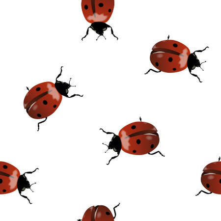 Seamless with realistic ladybugs on white background