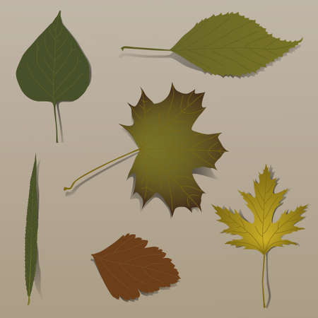 Set of realistic autumn leaves Vector