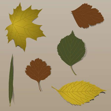 Set of realistic autumn leaves Illustration