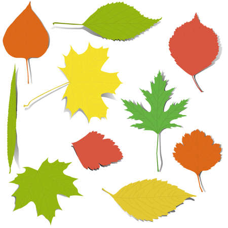 Set of isolated realistic autumn leaves Illustration