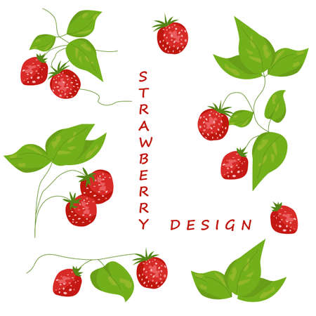 Set of isolated strawberry elements for design Illustration