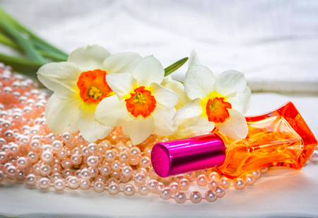 perfumery concept: Red glass perfume bottle, pearl beads and daffodil flowers with water drops on petals. Floral aroma concept.