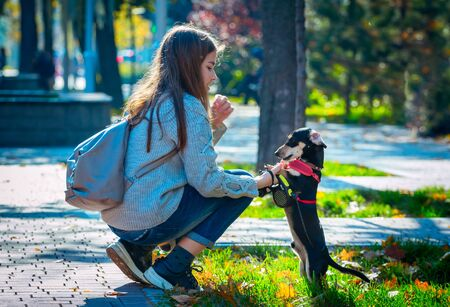 Teenager girl, playing with her dog - dachshund puppy - on a green grass in a city park
