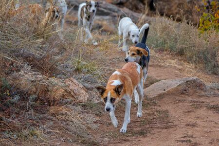 Flock of stray dogs, walking in the forest. Homeless puppies.