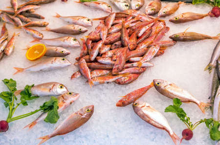Fresh fish - red mullet - on ice for sale at outdoors sea food market. Raw sea fish.