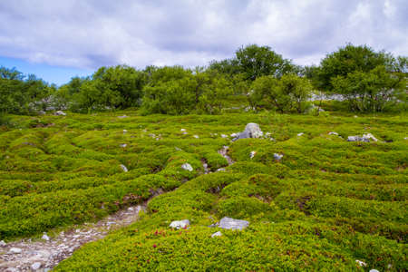 karelia: Labyrinth on Zayatsky island, Karelia, North of Russia.