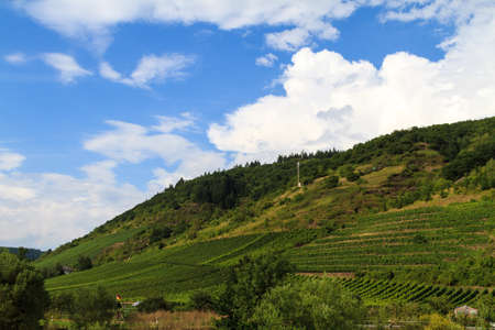 wine growing: Wine growing area in the Eifel Stock Photo
