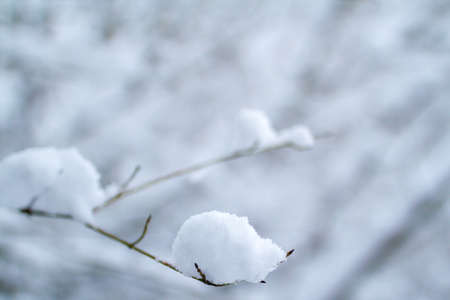 The branches in the snow. Beautiful winter time.