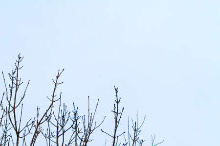 The branches in the snow. Winter time.