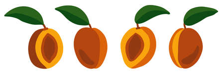 Set of vector peaches on a white background. Isolated realistic illustration. Juicy and bright fruits. Whole and halves of peaches with pits.
