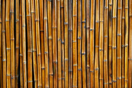 Background texture of bamboo wall. Natural pattern.