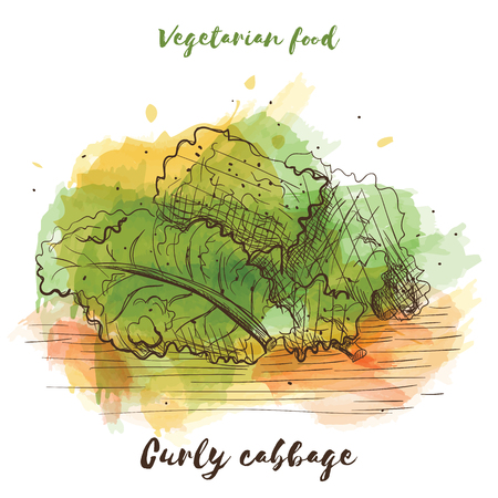 Watercolor sketch vegetarian food vector illustration. Illustration