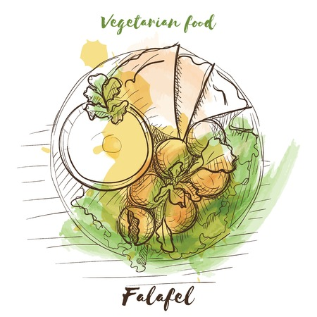 Vector watercolor sketch vegetarian food. Eco food. Falafel isolated on white sketch.