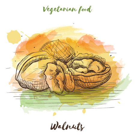 Vector watercolor sketch vegetarian food. Eco food.