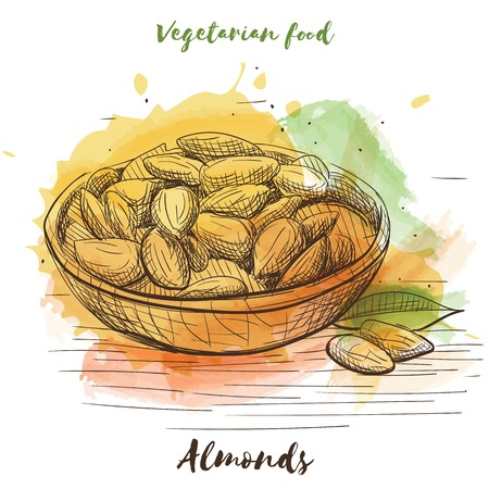 Vector watercolor sketch vegetarian food. Eco food. Almond isolated on white sketch.
