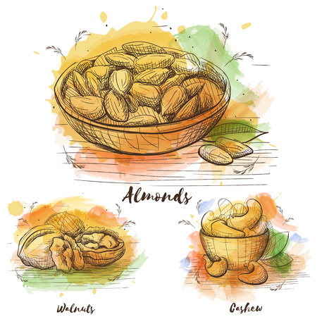 Almonds vector illustration. Hand drawn watercolor set on white backdrop. Vegetarian Food collection. Sketch card.