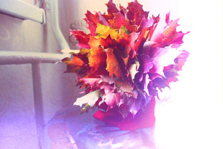 frondage: bouquet of autumn red leaves   maple