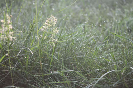 gaily: beautiful little crystal of morning dew on the green grass under sun Stock Photo