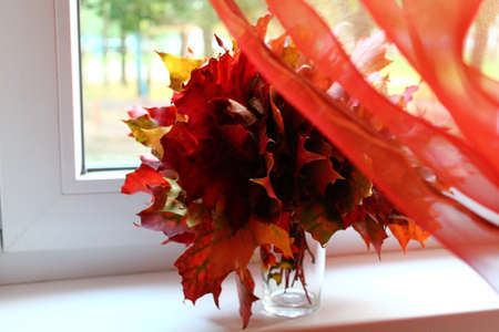 frondage: nice bouquet from red bright autumn maple foliage and light  red curtainn Stock Photo