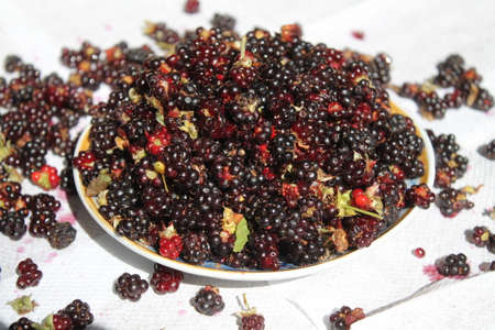 ingedient: sweet black juicy dewberries from forest lay in bowl