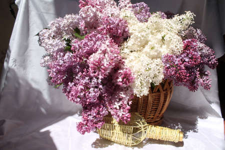 pompous: beautiful aroma pompous bouquet of garden  lilac diffrent kinds into basket