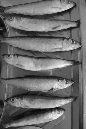 range of silver small size fresh fish lay prepare for cook