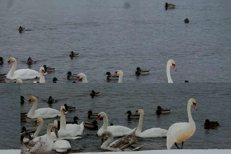 birds bazaar in river flow in winter