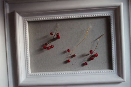 wild red berry in white frame