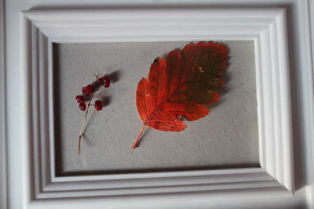 red autumn leaf in white frame