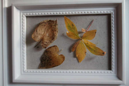 yellow autumn leaves in white frame