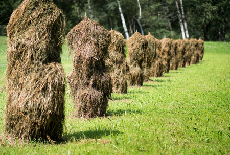 An ancient way to dry grass 版權商用圖片