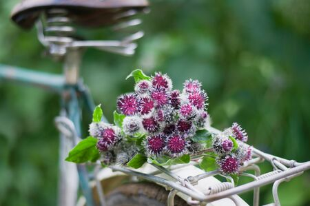 Bouquet from the inflorescences of a burdock on a bicycle trunk in summer