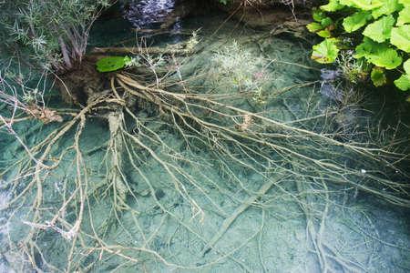 Sezione di radici subacquee con reflex acqua in Plitvice, Croazia