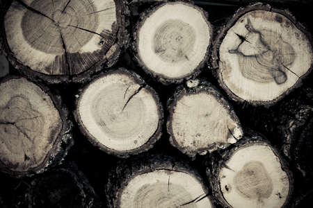Section of cut off logs for texture background