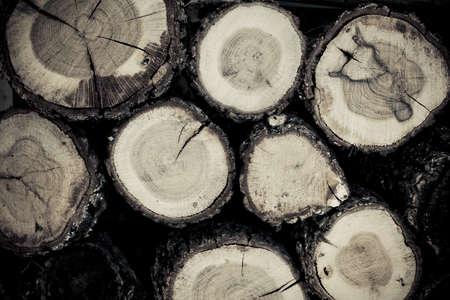Sezione di tronchi tagliati per la texture di sfondo