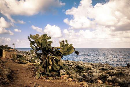 Prickly Pear cespuglio in un percorso nel deserto sul mare in Sicilia Italia Archivio Fotografico
