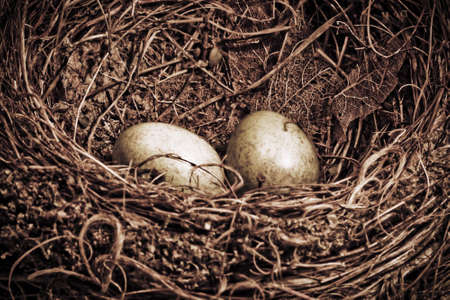 Merlo nido con due uova in stile d'epoca Archivio Fotografico