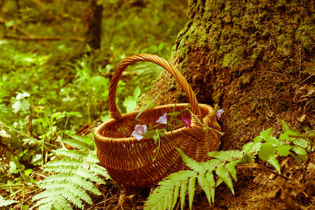 Wicker Basket  With Flowers Bell Near Wood In Forest Summer. Wicker Basket And Flowers Bell On Forest Background. Retro Styled Imagery.