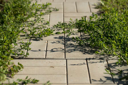 Tile Road Pavement With Grass In Sunny Summer Garden Close Up.