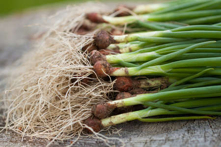 Fresh Green Onions With Roots On Wooden Board Close Up.