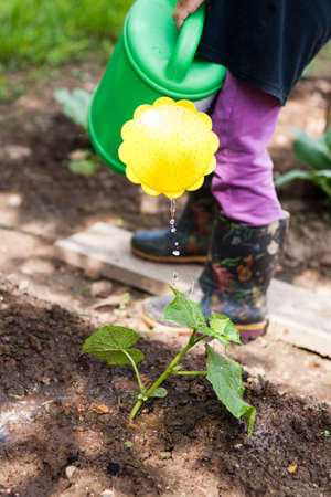 Watering Young Plant Cucumber. Little Girl Water Watering Can Cucumber In Garden. Stock fotó